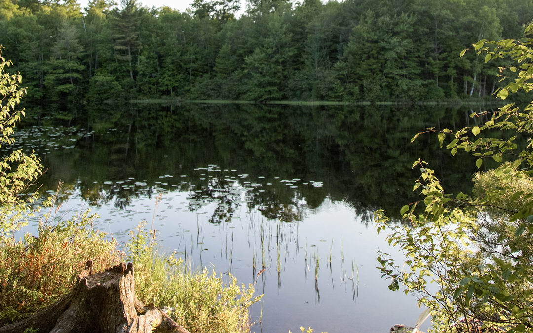 Calm Waters and Loon Calls