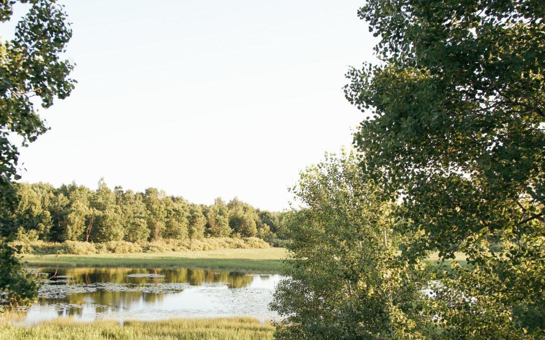 A Secret Waterfowl Refuge in Weston, Wisconsin