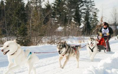 Three Bear Sled Dog Race in Land O' Lakes