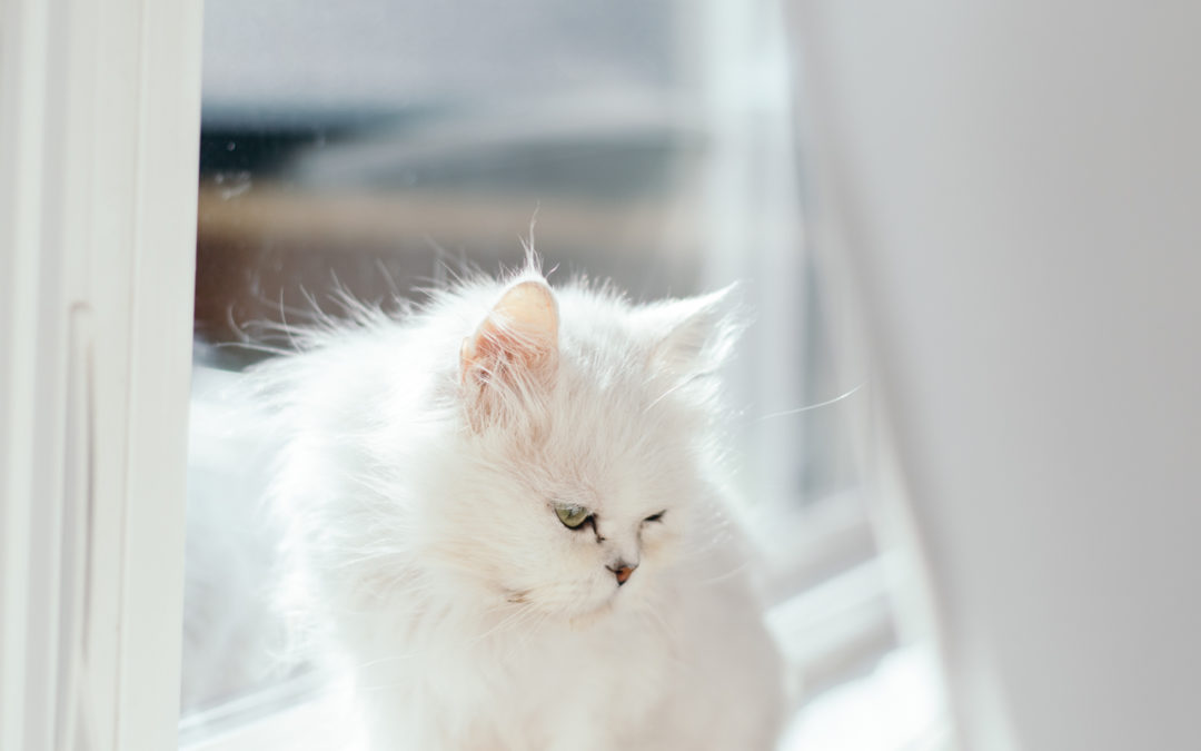 I Adopted a Cat!