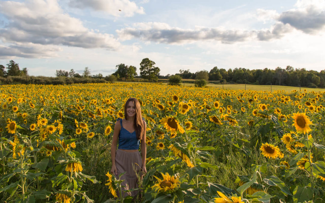 Sunflowers at Helene's Hilltop Orchard
