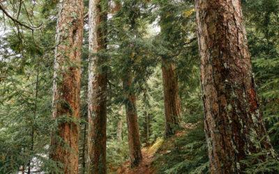 Trampers Trail
